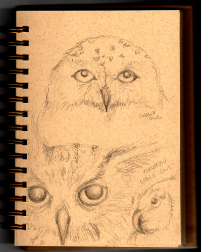 Snowy Owl and European Eagle Owl sketch