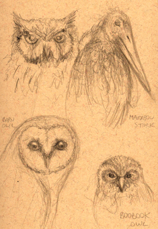 Unidentified owl (!), Marabou Stork, Barn Owl and Boobook Owl