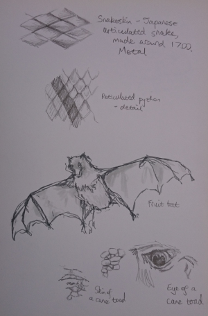 Sketches of bats, snakeskin, toad's eye and skin