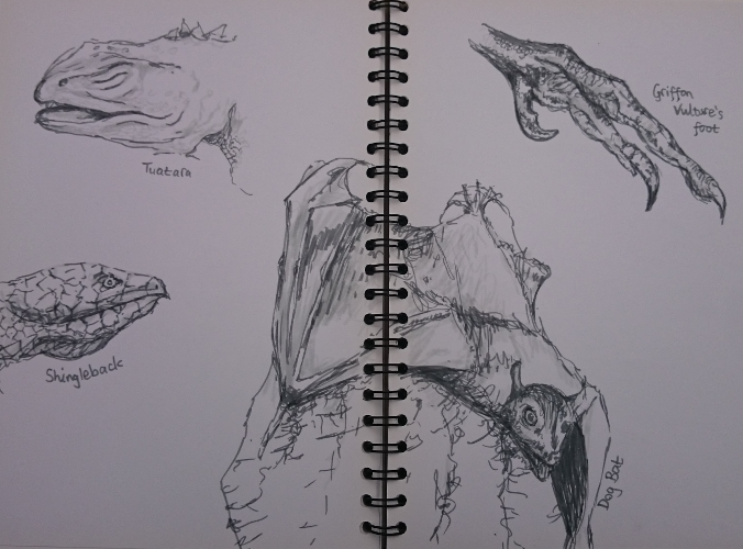Sketches of lizard faces, dog bat, bird talon