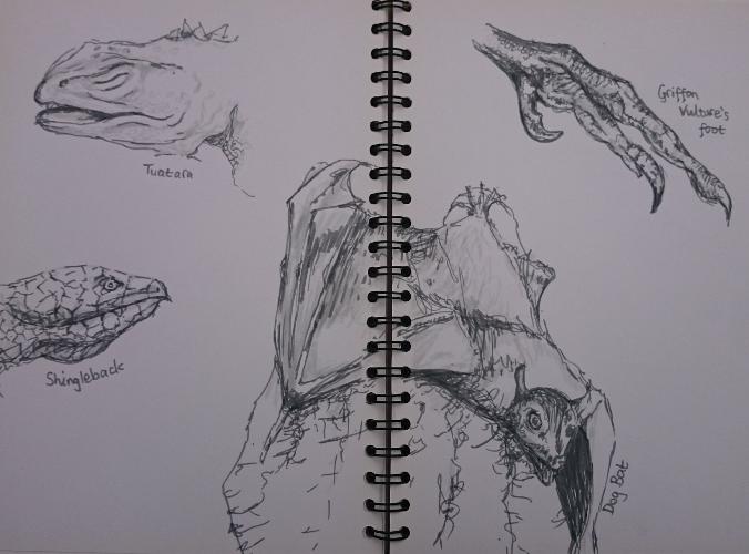 Sketches of lizard faces, dog bat, bird talon