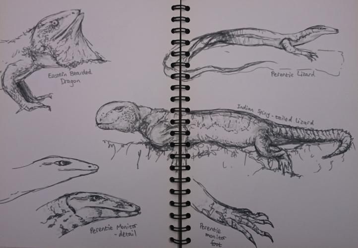 Lizard Sketches from Manchester Museum